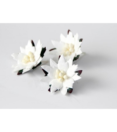 Пуансетии белые, 4 см