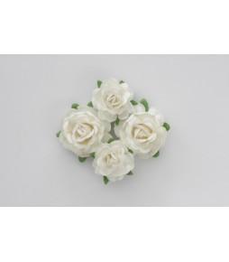 Цветы чайной розы белые