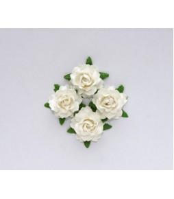 Цветы кудрявой розы белые