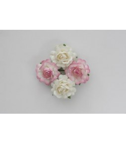 Цветы розы бело-розовые
